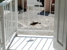 jacco tropical warm bird porch white rail railing railings front frontporch perching