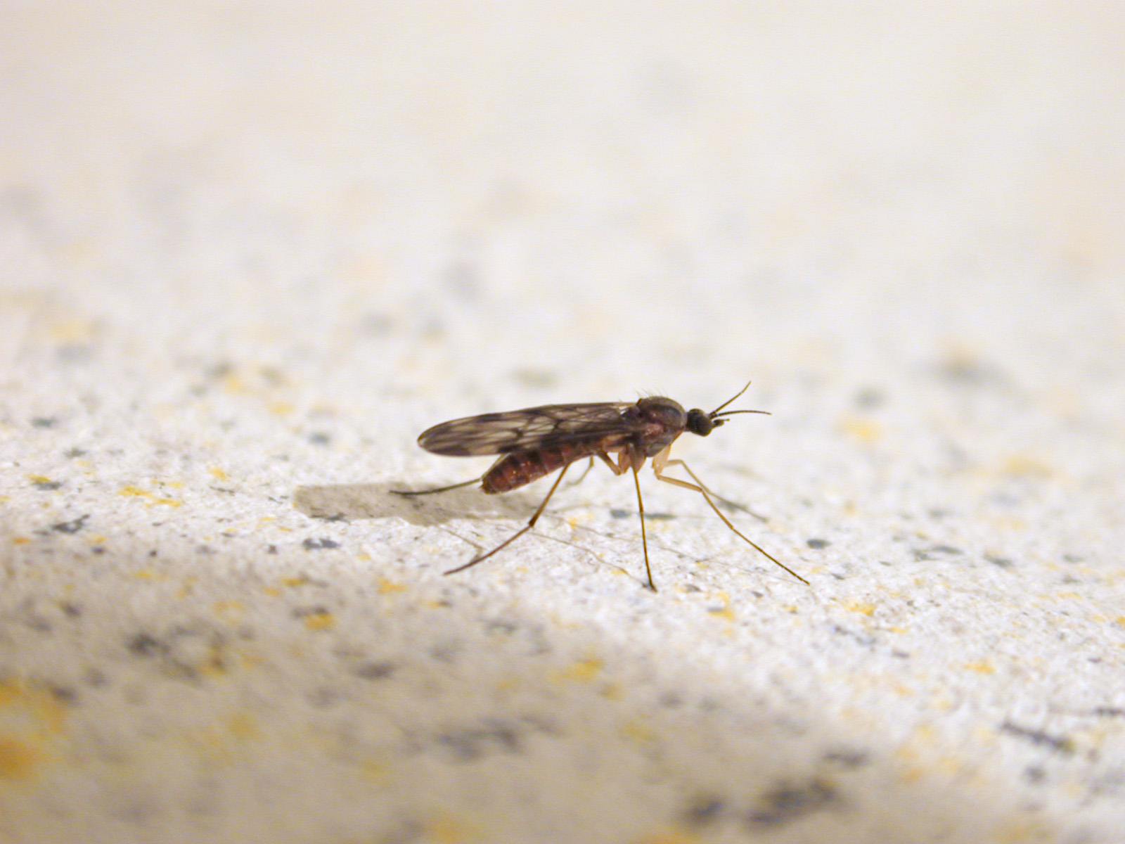 Image*After : images : fly mosquito insect malaria sting ... - photo#29