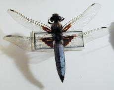 dragonfly top wing wings vein transparent blue light-blue texture collection white