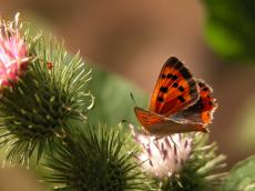 nature animals insects butterfly macro
