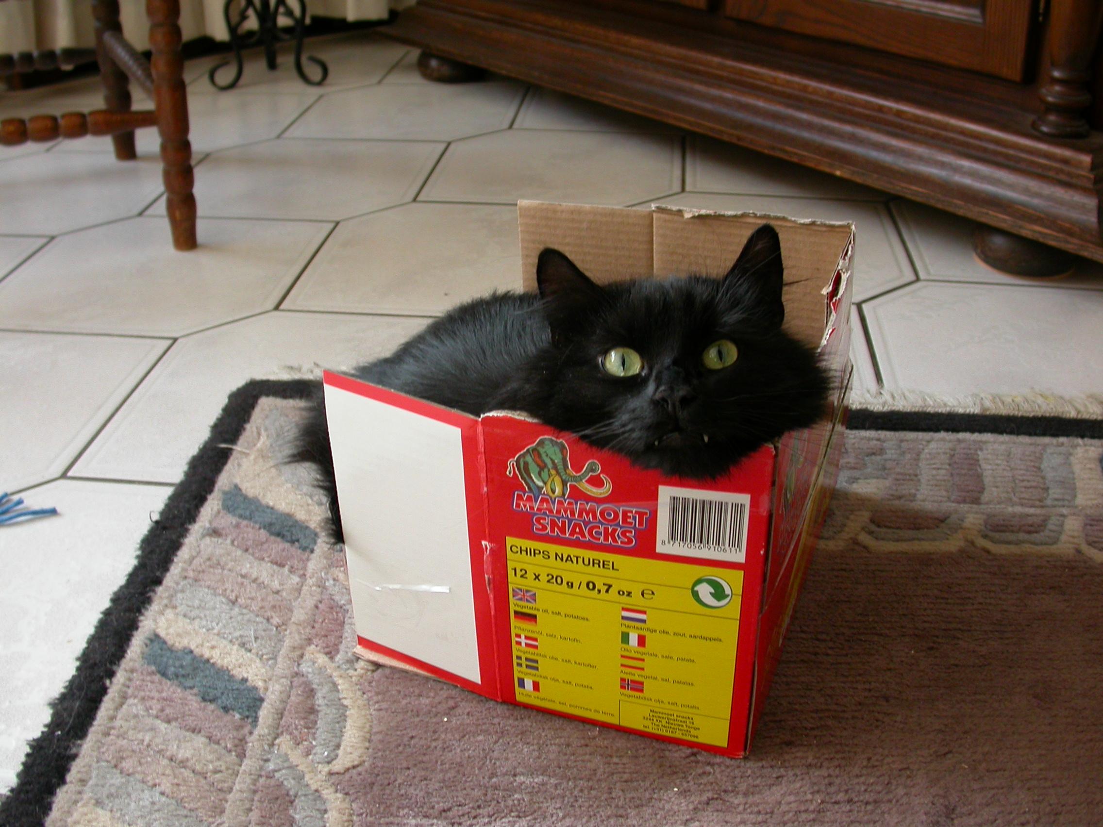 eccomi! mi sono nascosto qua dietro! non sono spiritoso??? (ehhh! te dico) dans gatti b17eva029