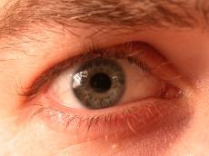 nature characters humanparts eye pupil iris hair eyelash lash eyebrow brow stefan