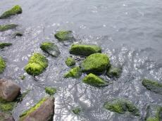 water nature elements waves rock rocks boulders boulder algae seaweed