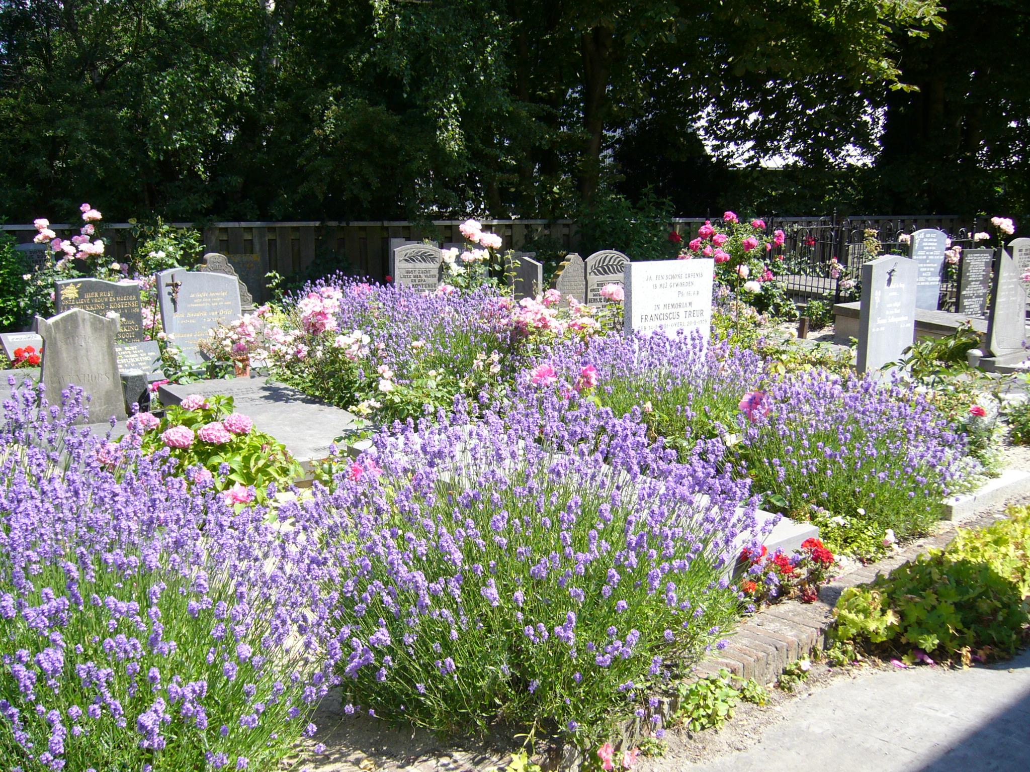 Цветы многолетники на кладбище фото