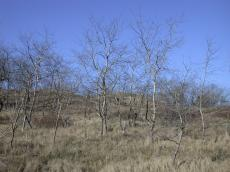 nature landscapes tree trees winter dune dunescapes grass wire fence