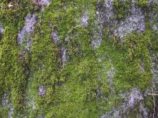 moss rock galen slater vegatation green