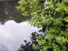tree branch reflection park trees water leaf leaves green sky