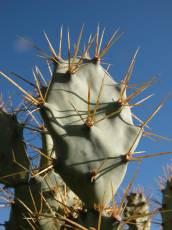 nature plants succulent cactus spike spikes