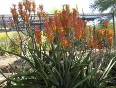 burns_jean flower plant desert hot cactus