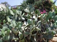 j_d nature plants cactus succulent