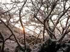 eva tree shrub branches snow cold winter Christmas
