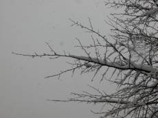 snow on branches branche twick tree winter cold