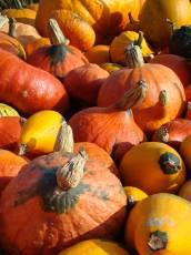 txpinky pumpkin pumpkins yellow orange fruit vegetables autumn