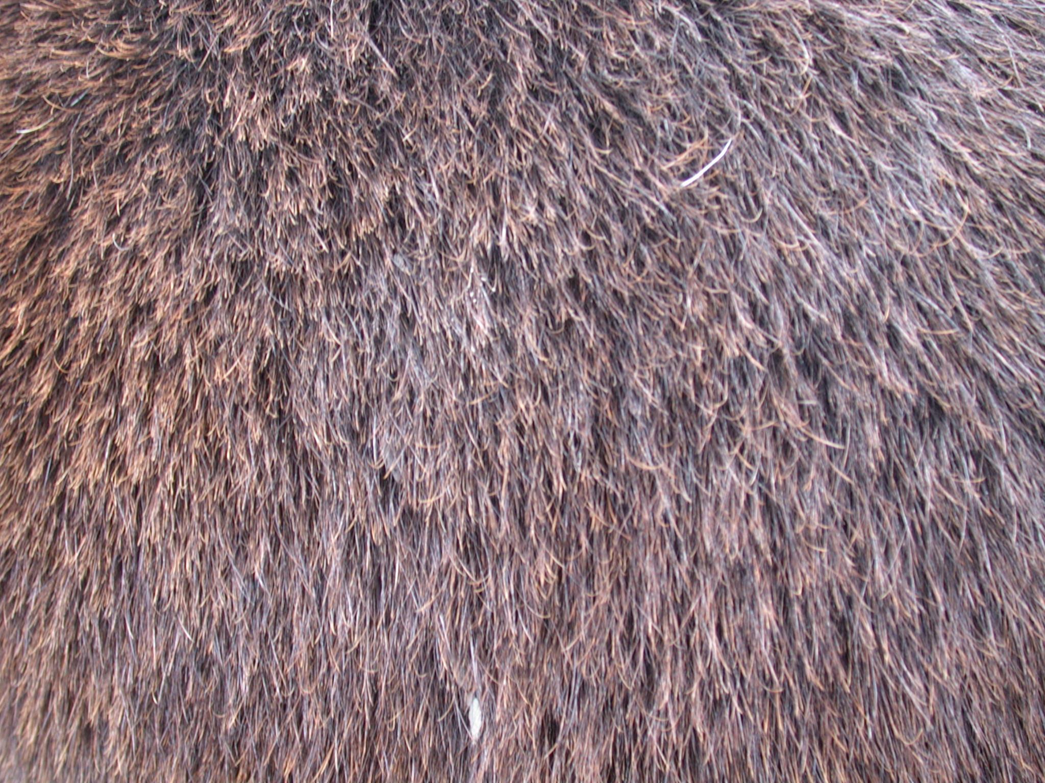 Moose  Wikipedia