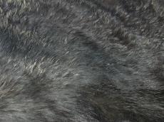 fur hair sticky muddy dirty black hairy horse texture
