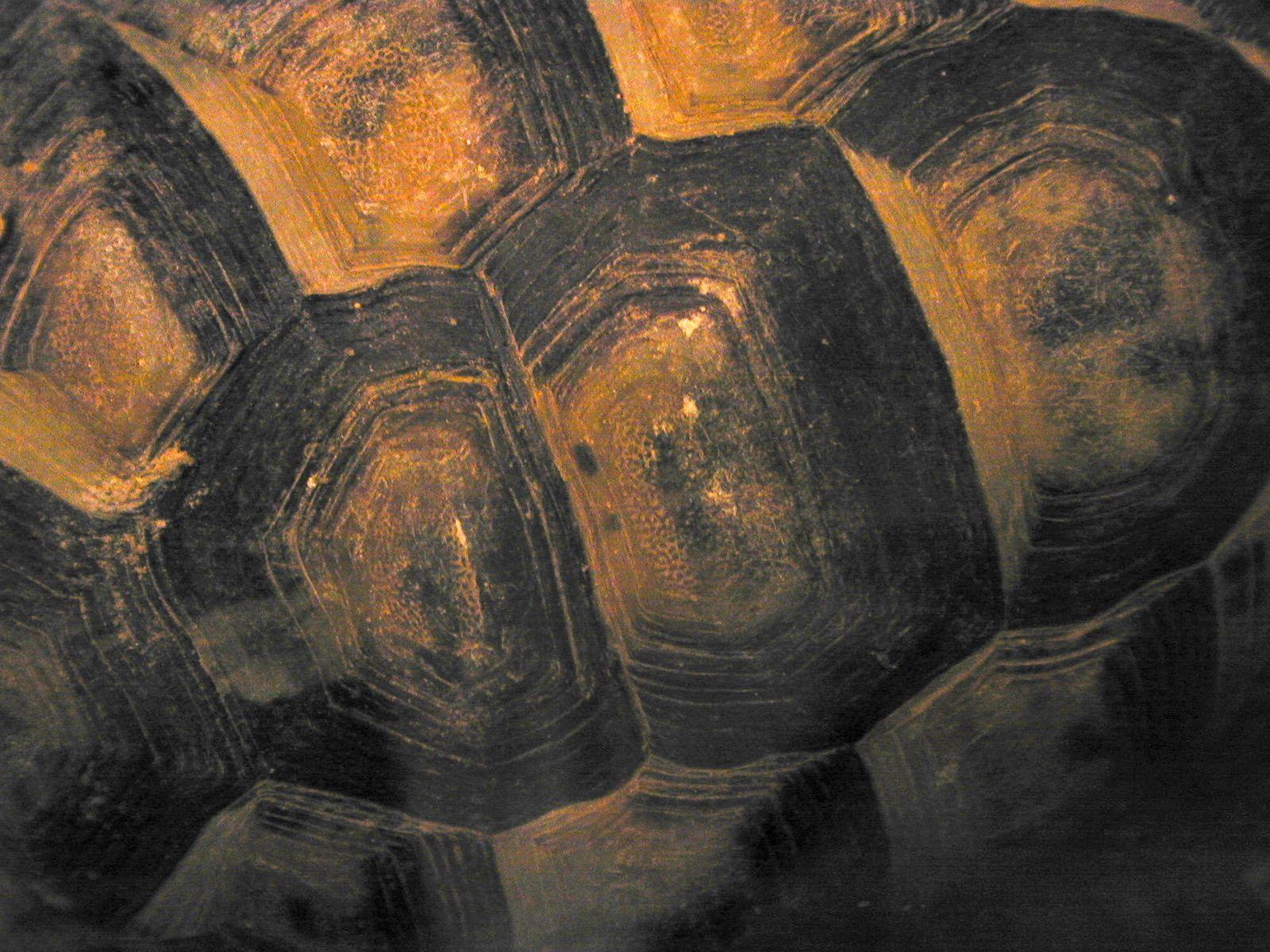 turtle shell pattern - HD1600×1200