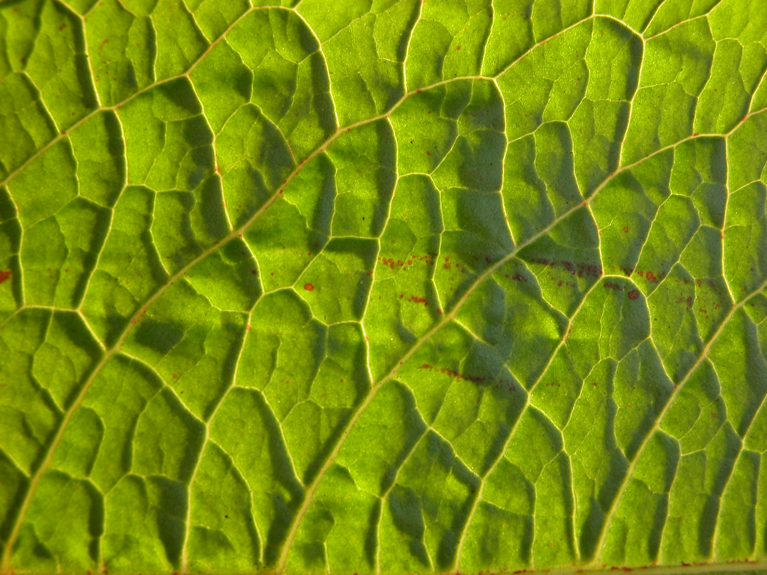 image after textures nature texture vein veins leaf green