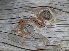 wood texture coarse eye curves