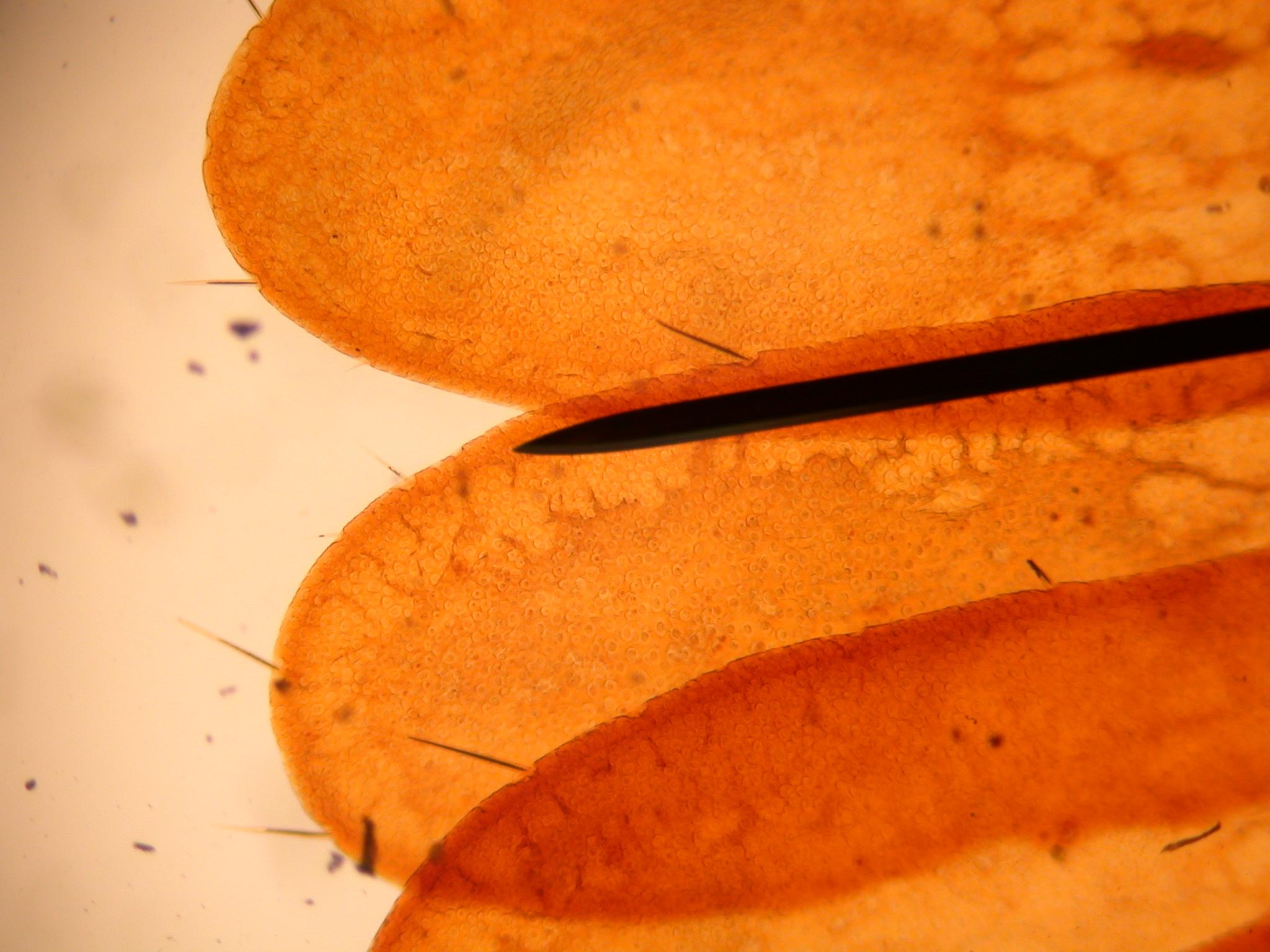 microscopic texture good orange cell cells organism orange