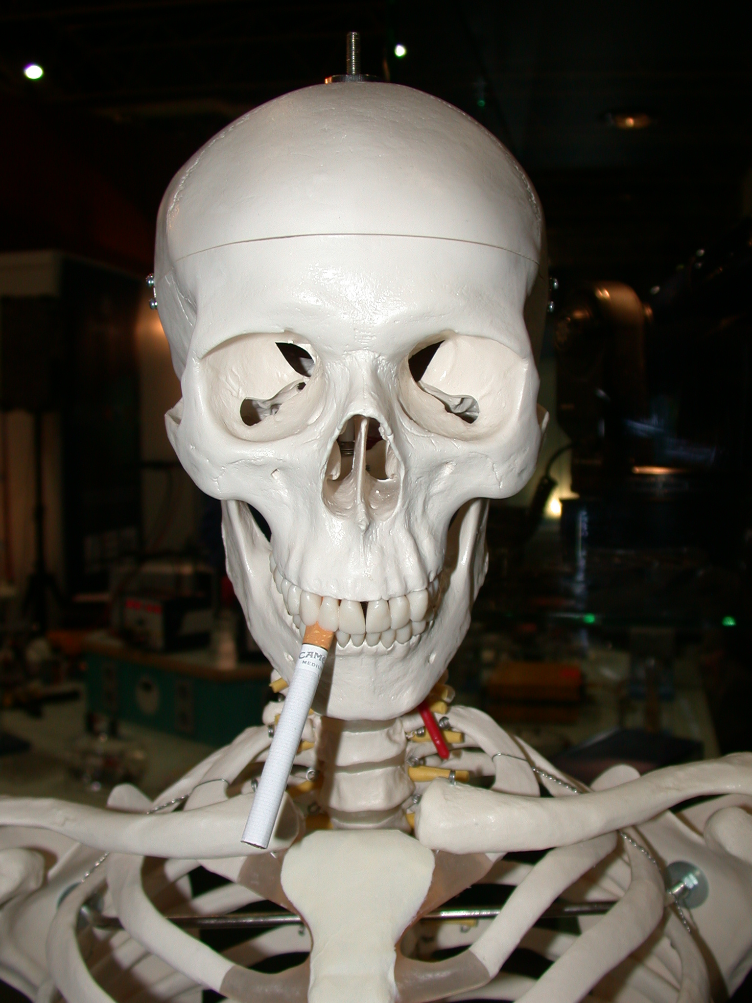 smoking kills and gives you amazingly clean teeth in this case :) skelleton sigarette smoke skull jaw bones plastic