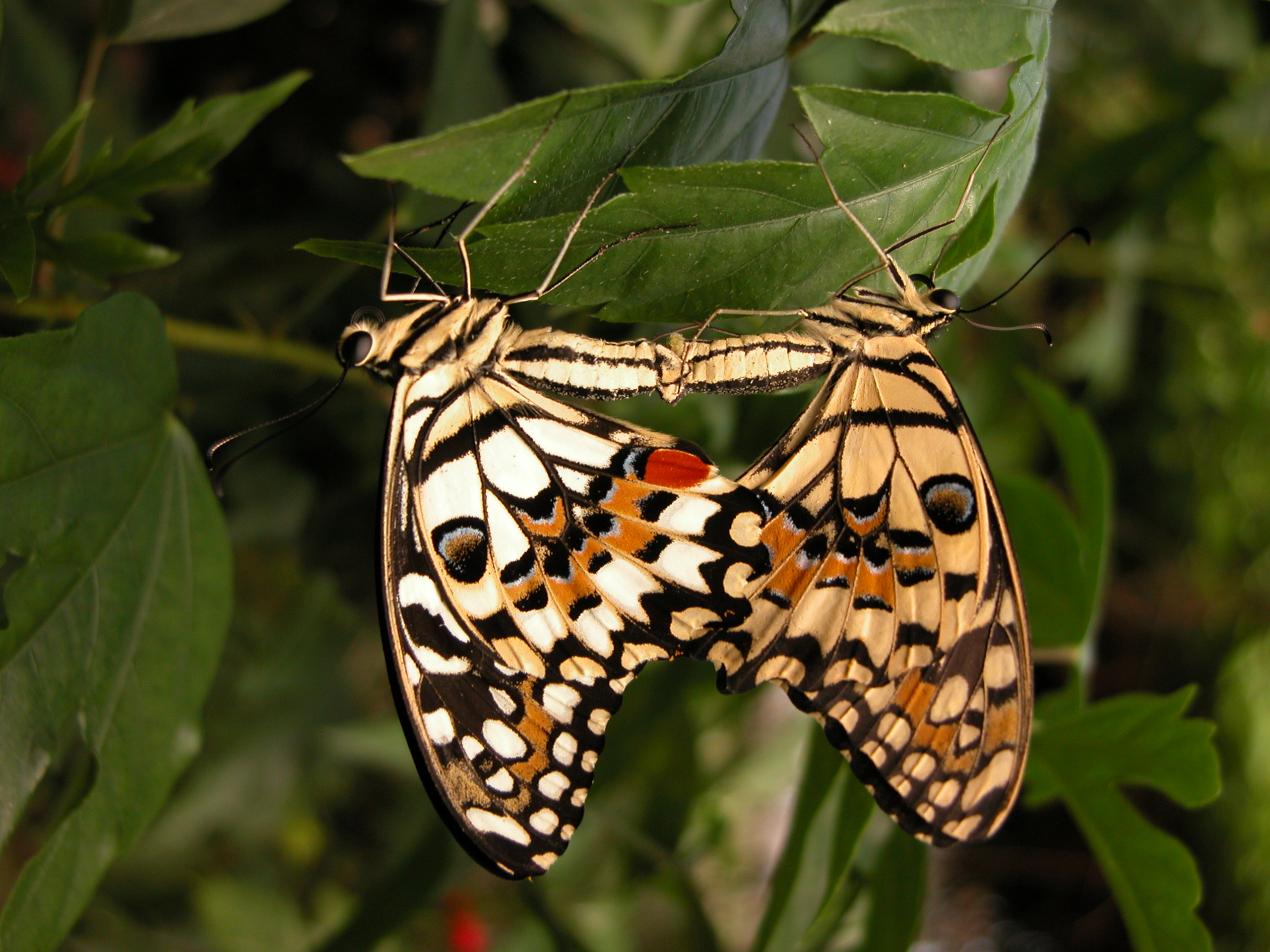 image.php?image=b12nature_animals_insect