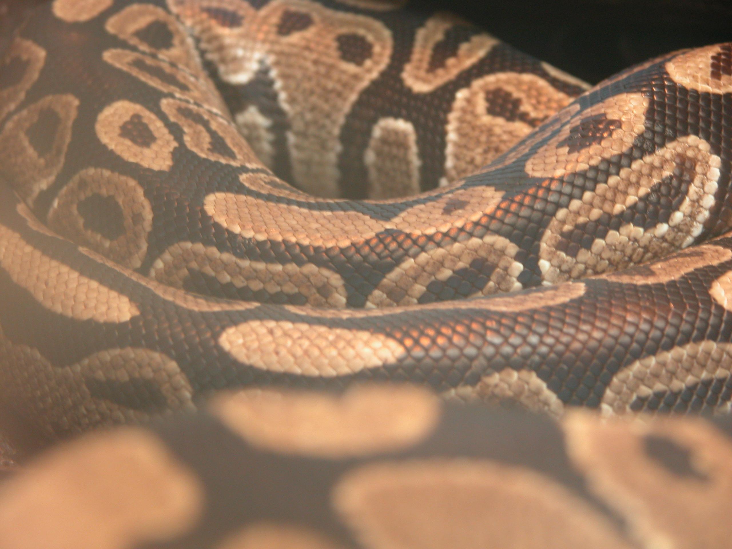 snake long skin snakeskin reptile scale scales pattern