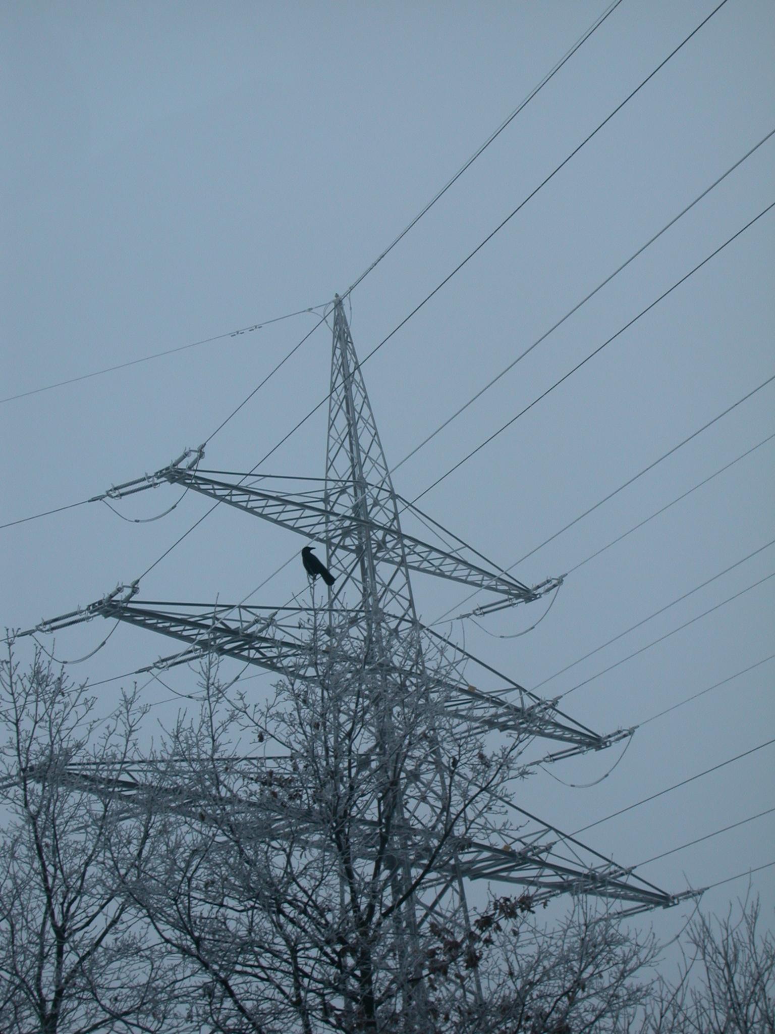 power lines crow snow cold christmas winter tree grey