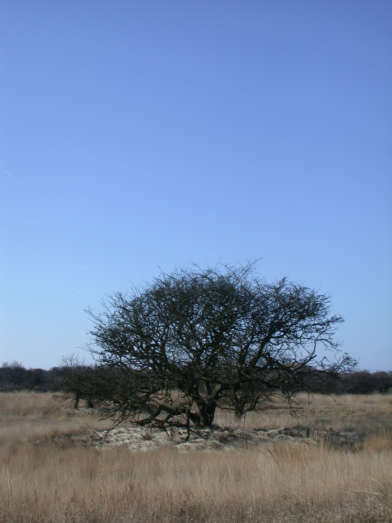 tree in open field winter grass brown blue sky