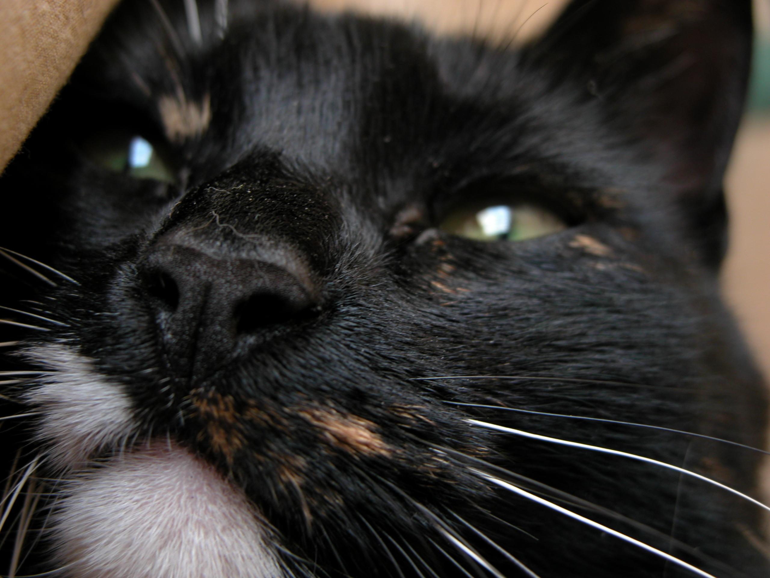 cat black and white cute head eye eyes closed green hair hairs fur royalty free