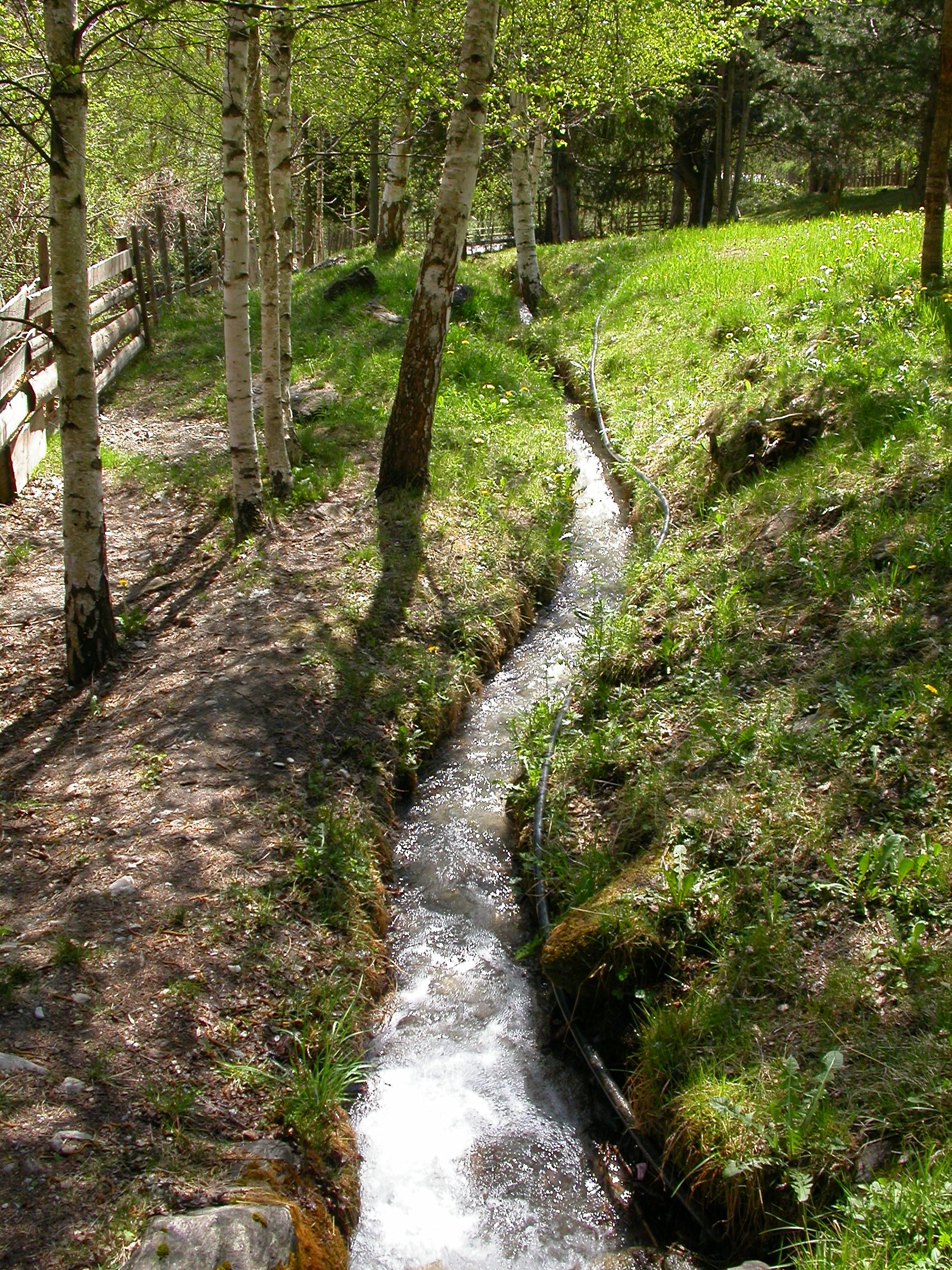 paul brook stream meander meandering small little woods grass slope trees