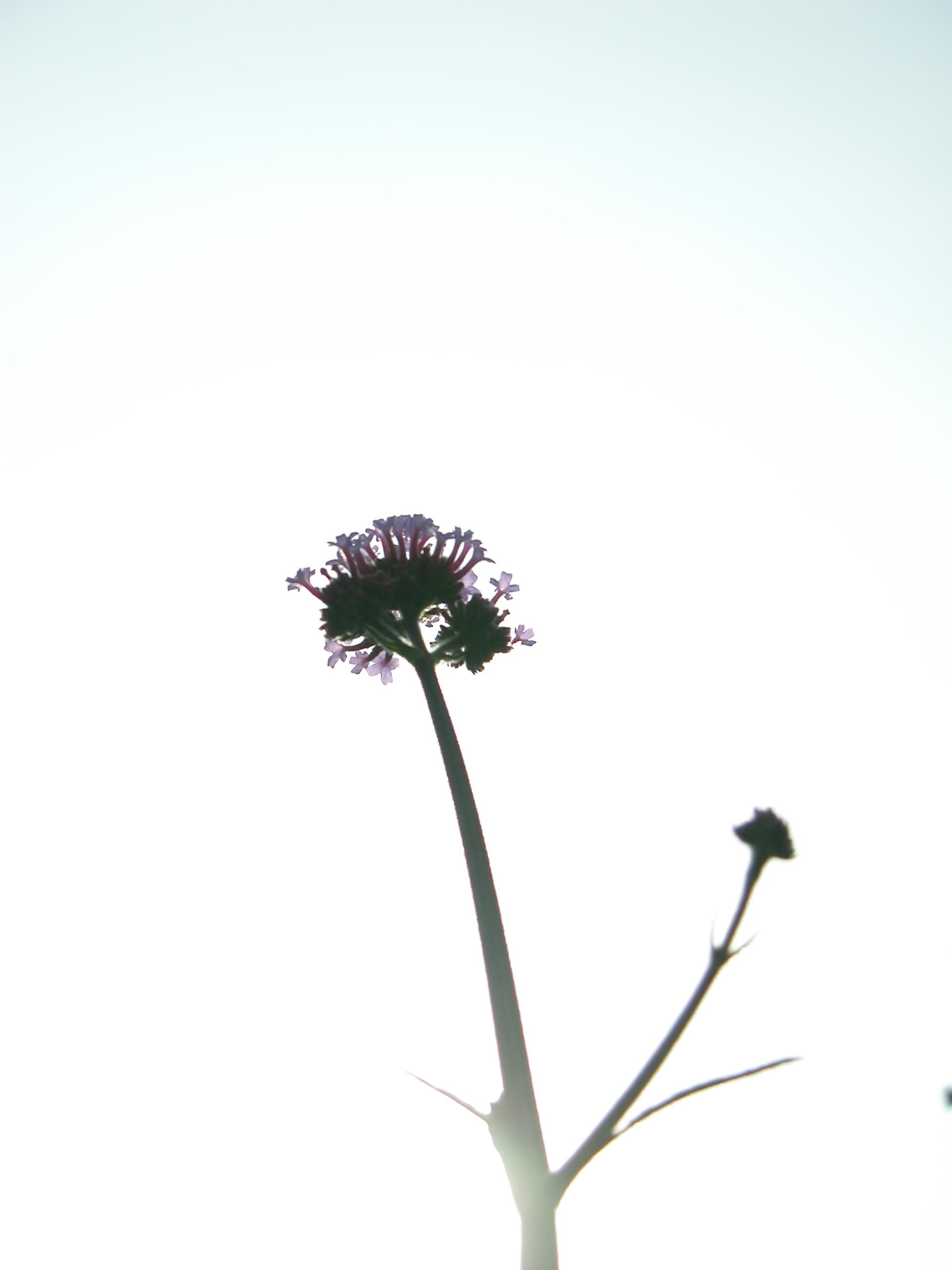 image.php?image=b13nature_plants025.jpg&dl=1