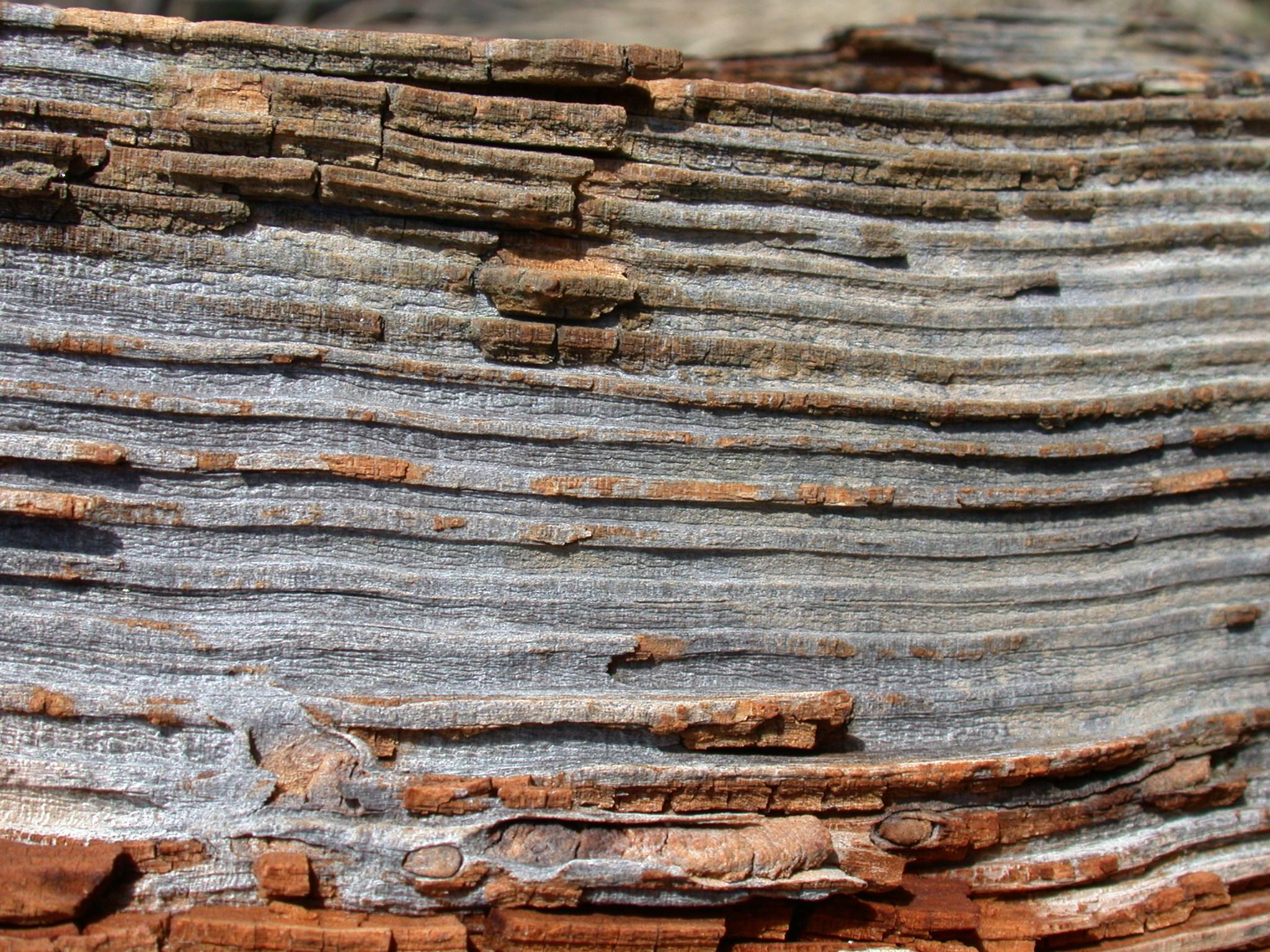 wood bark cut-thru layer layered layers horizontal plane lines