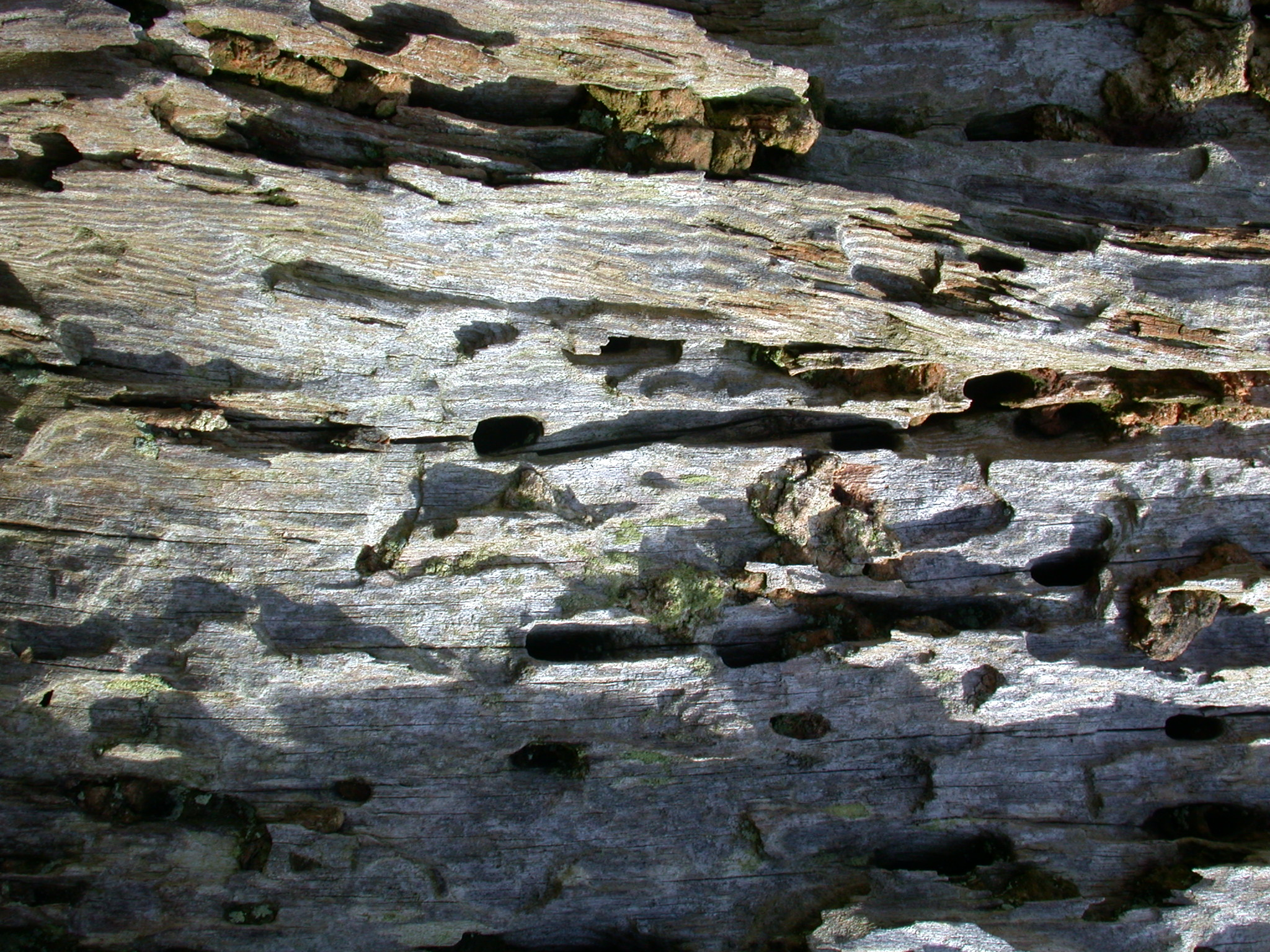 crag craggy rocky rocks tree old very worn out