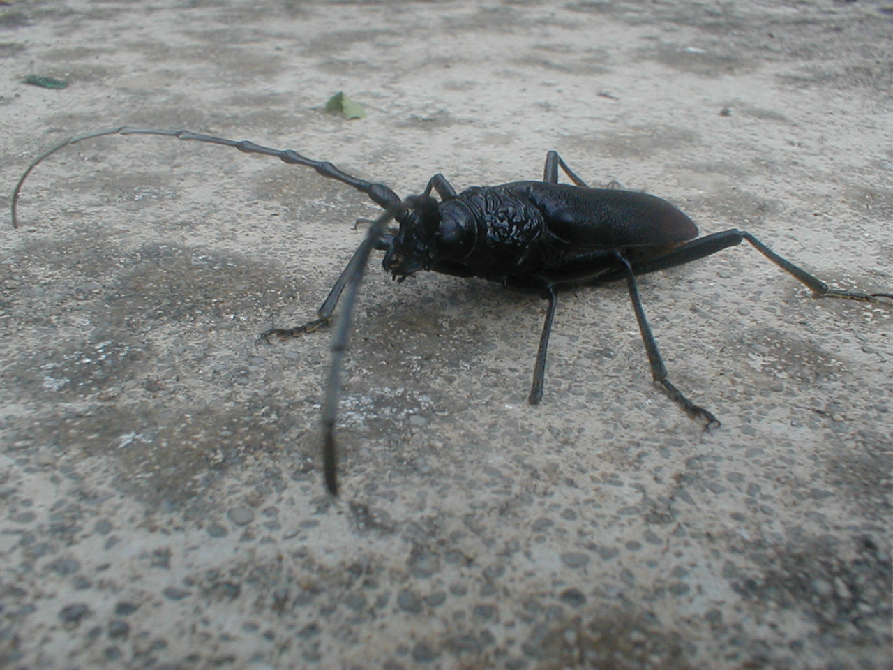 dallas bed bug treatment