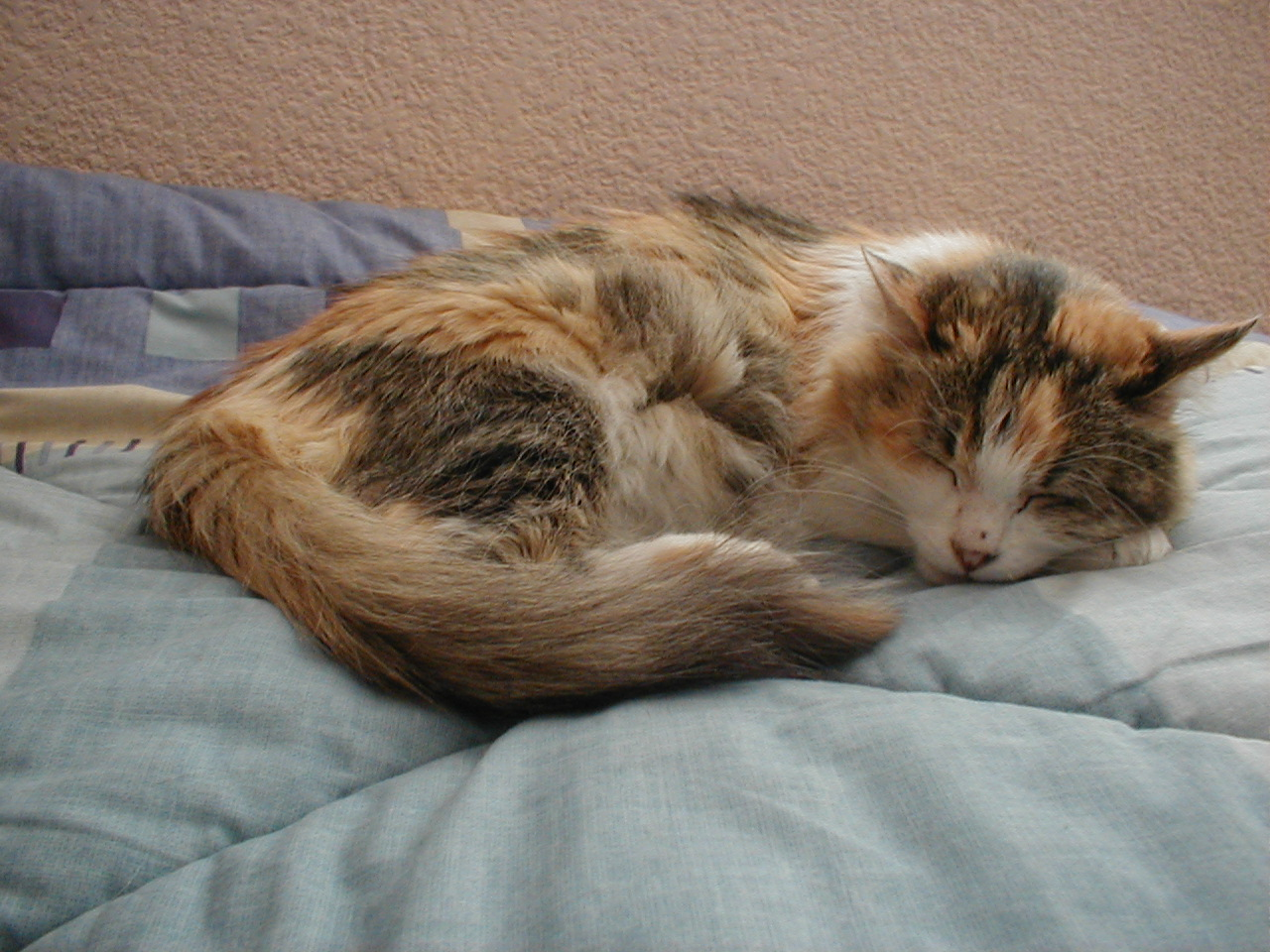 dario sleeping cat on bed nature animals land dreaming sleep