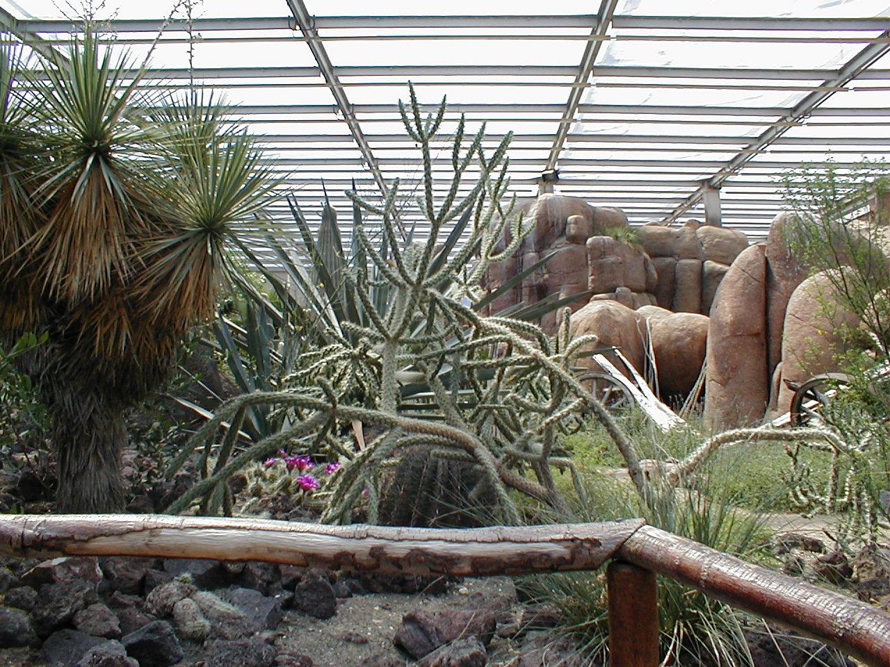 dario desert indoors cactus cacti rocks