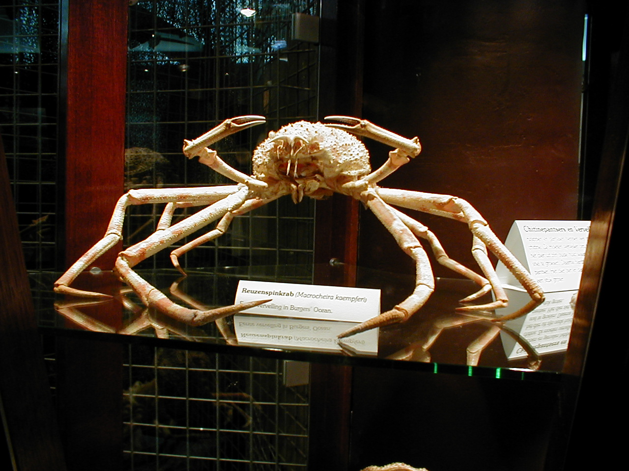 dario giant crab hit points for massive damage fossil claws legs spindly