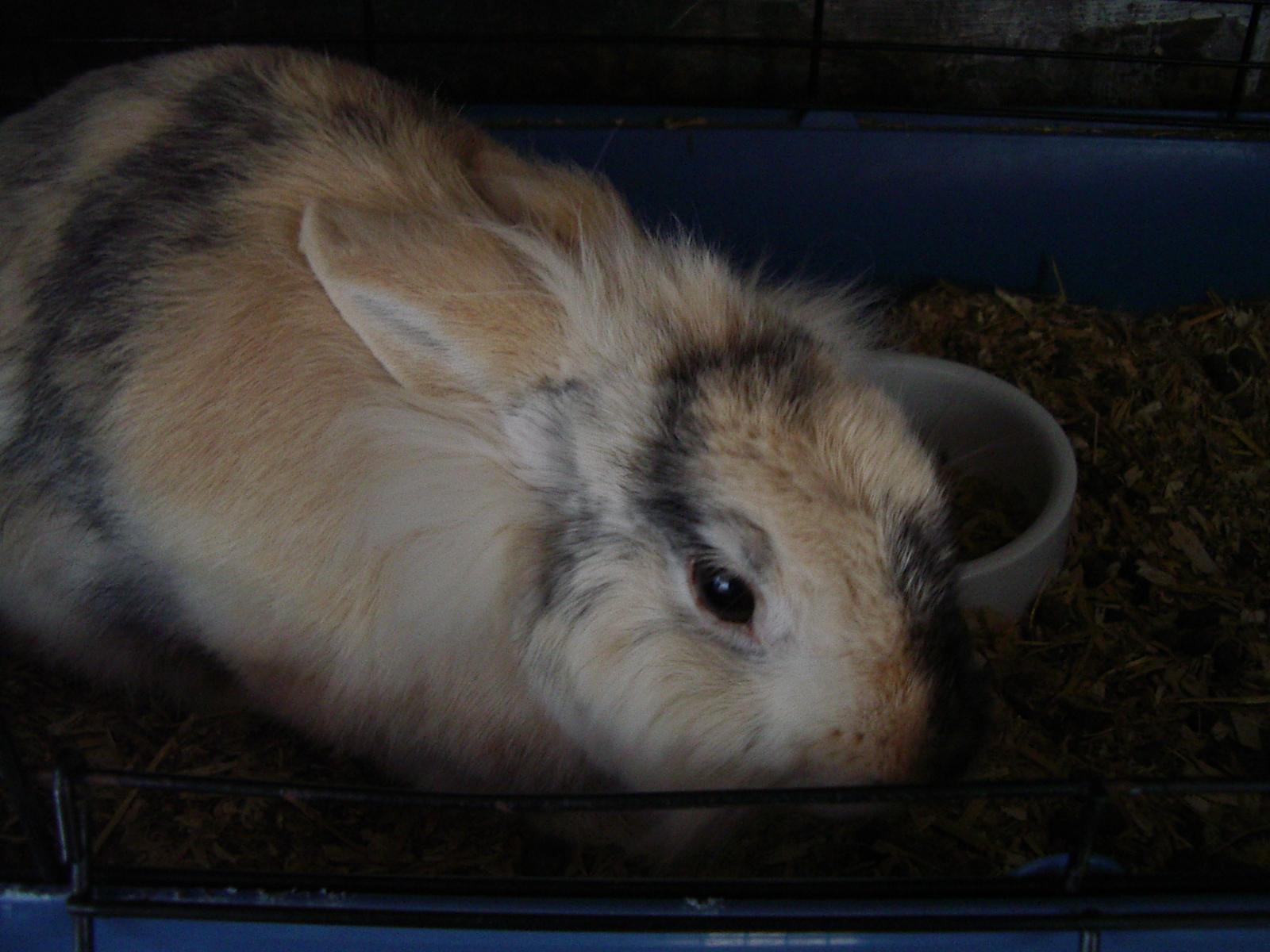 acheter vibromasseur rabbit