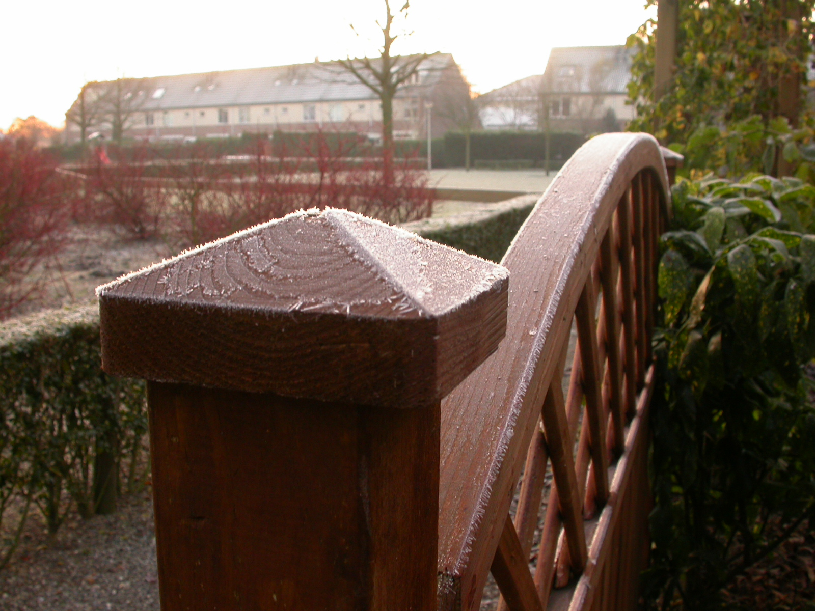 eva frost on a garden fence cold winter ice