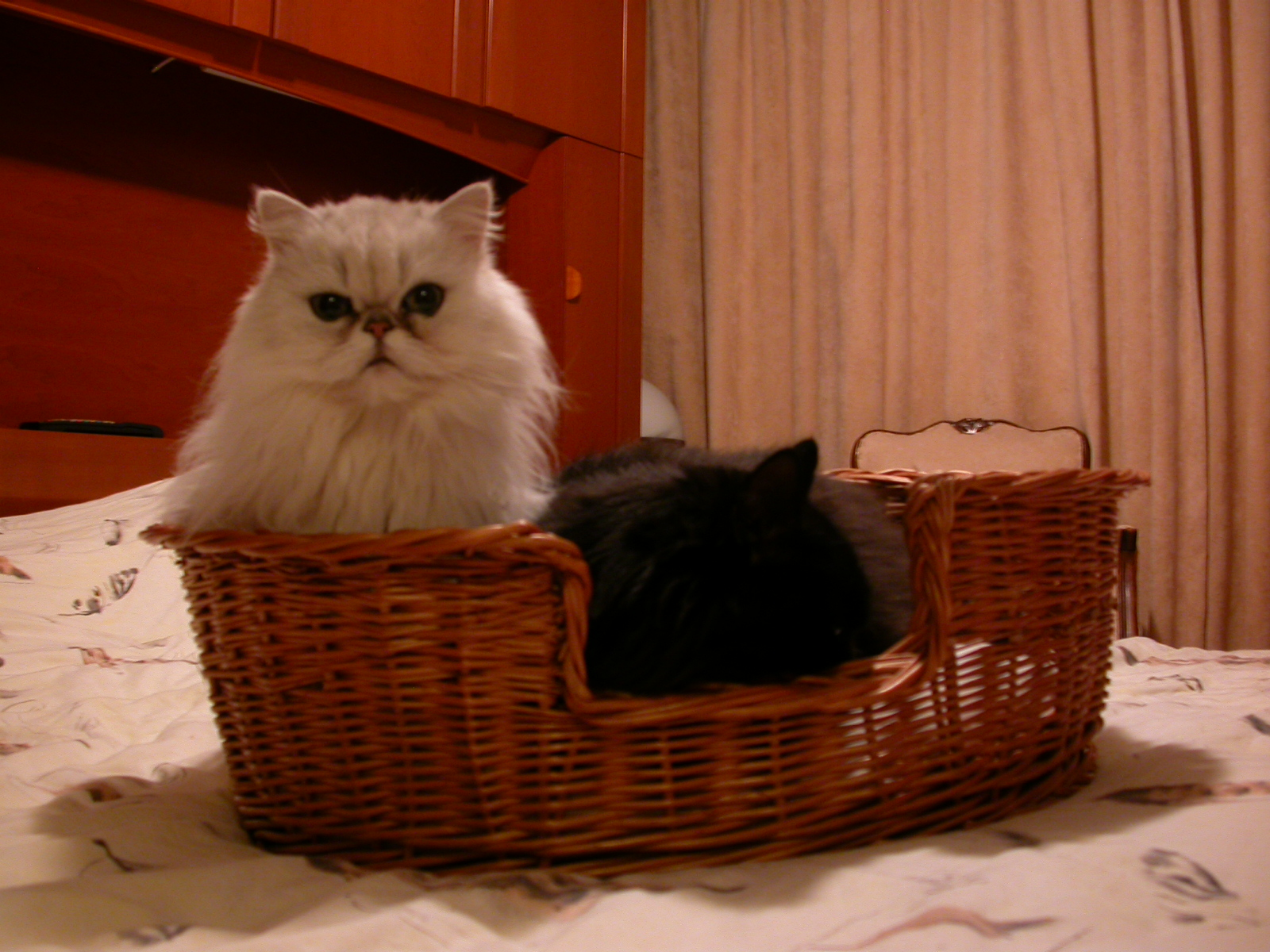 eva cat cats black and white basket fluffy fur sleeping cute pet pets