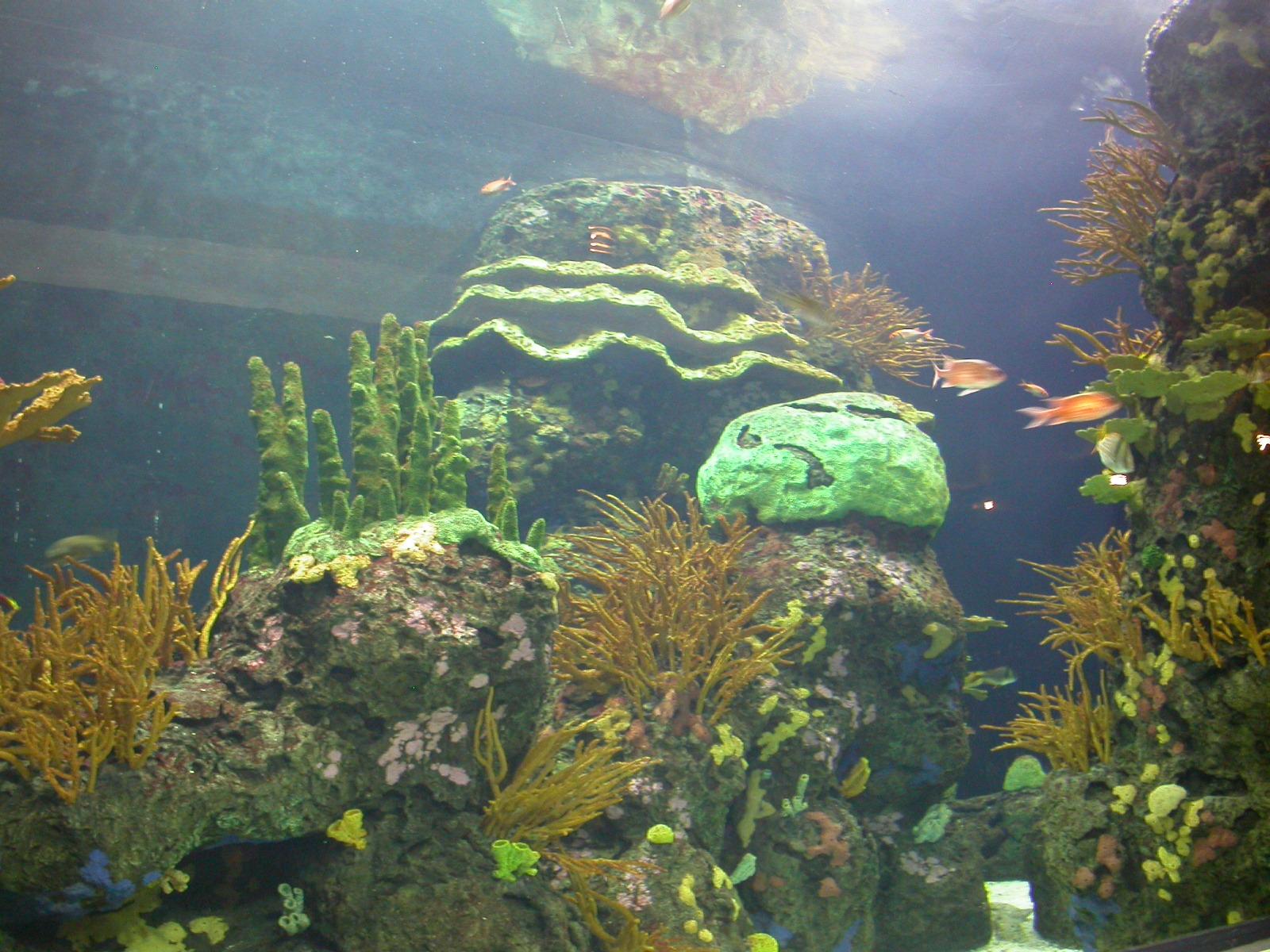 eva nature underwater reef aquarium fishes coral