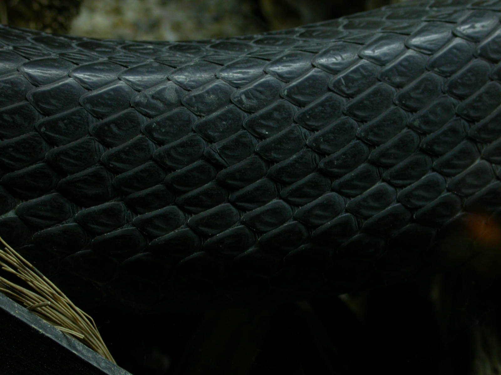 leather skin texture eva snake scale scales snakeskin black side