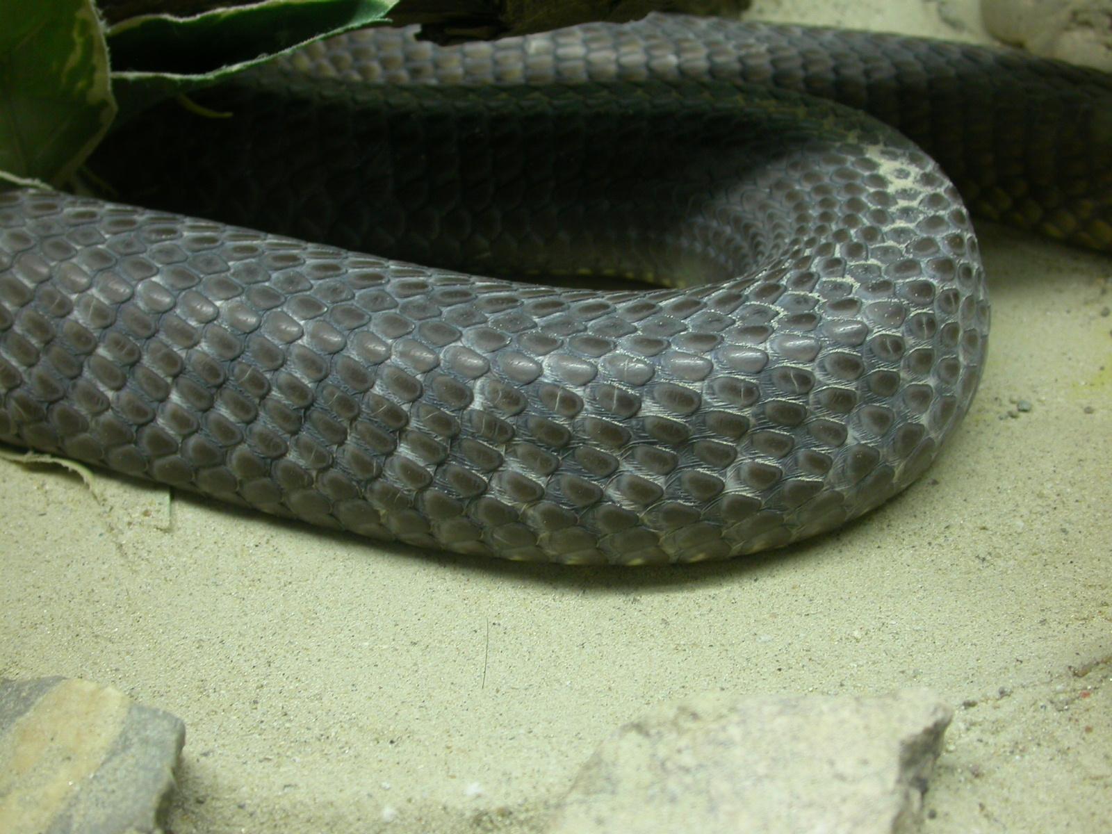 leather skin texture eva snake scale scales snakeskin black side