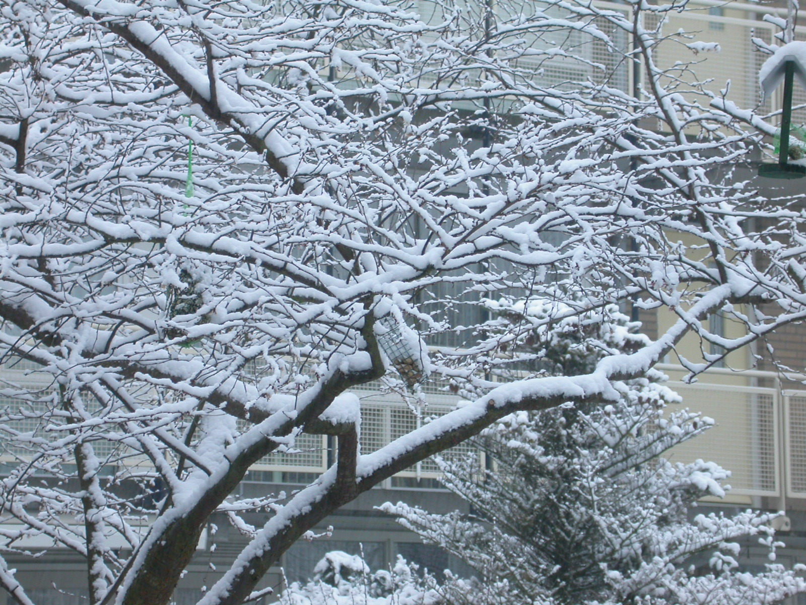 eva cold winter tree branches ice crystal snow frost freezing