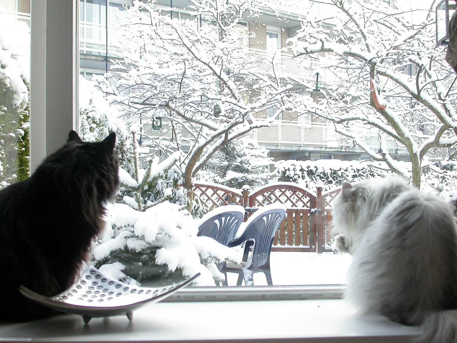 cats in window sill snowy snow winter cold cat fluffy garden Christmas eva