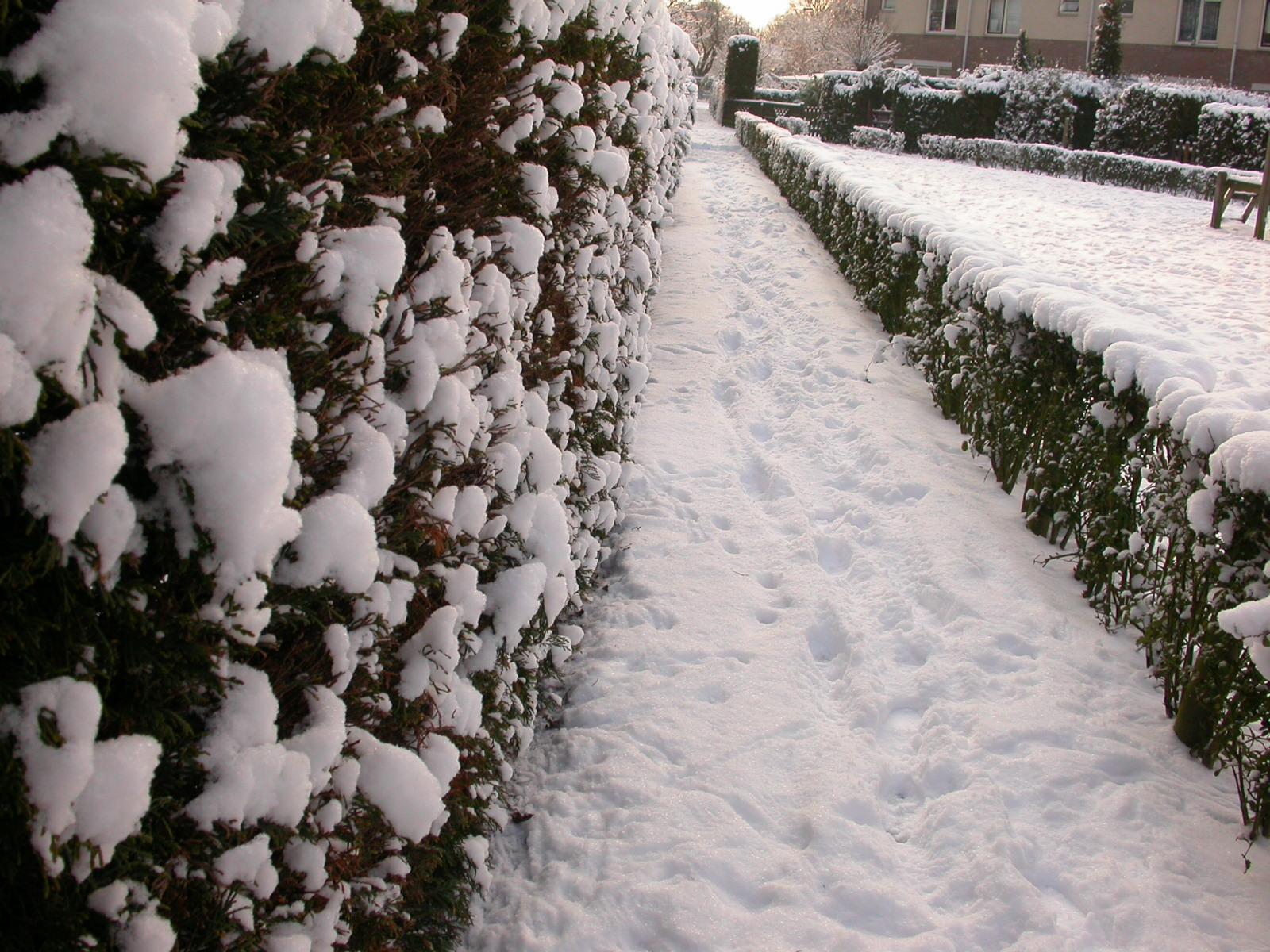 eva snow winter hedge