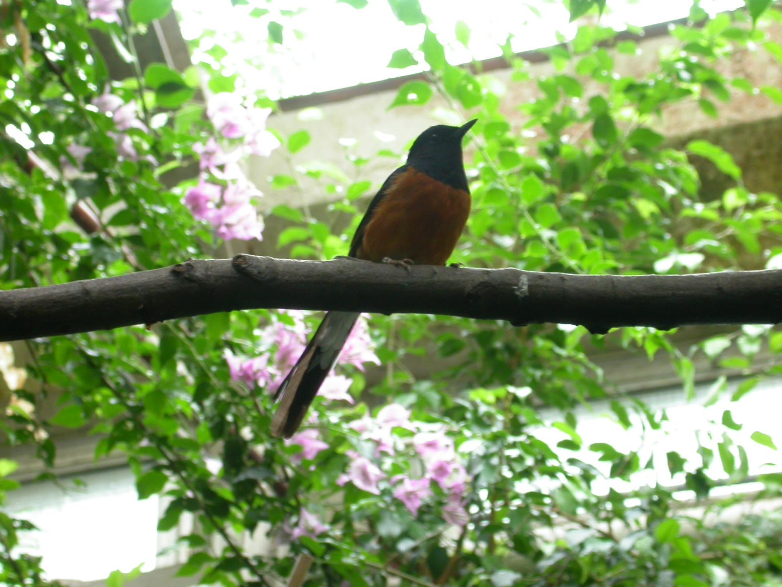 eva bird green on branch flowers silhouette