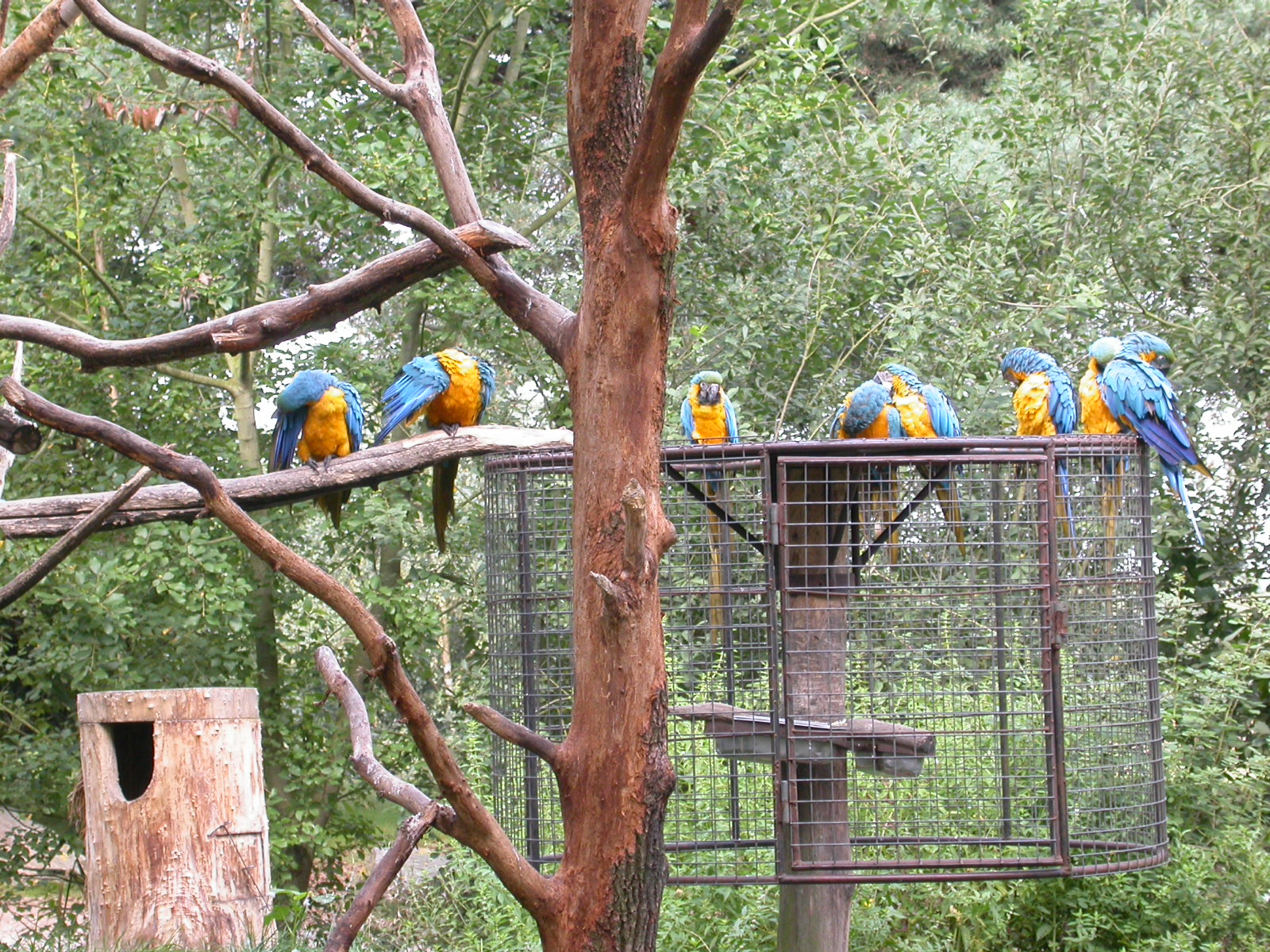 eva parrots on a branch zoo