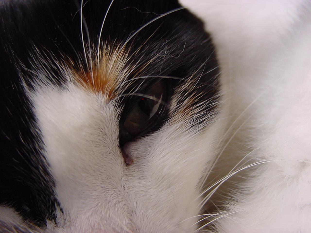 agenliga cat