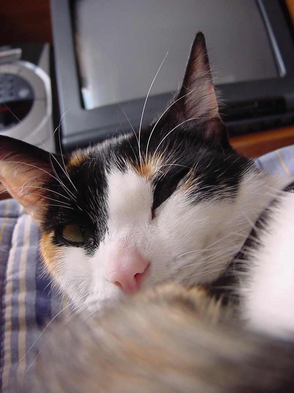insektokutor sleeping cat pet fur soft